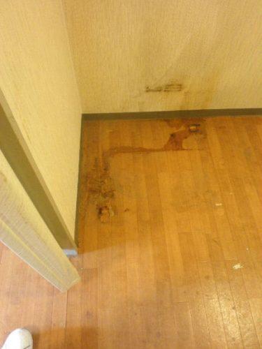 猫ちゃんのおしっこなど、床が最も汚れたエリア