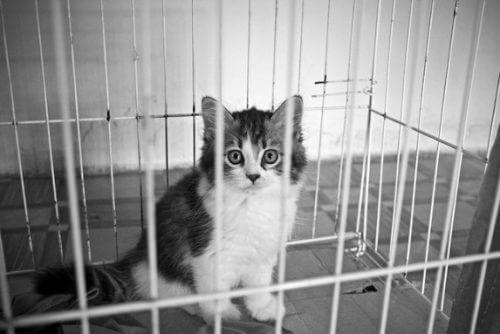 室内飼育で汚れた部屋のハウスクリーニング専門業者 トリプルエス 大阪