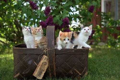 不用品片付けとハウスクリーニングの依頼で伺った大阪市中央区のお宅に住む3匹のかわいい猫たち