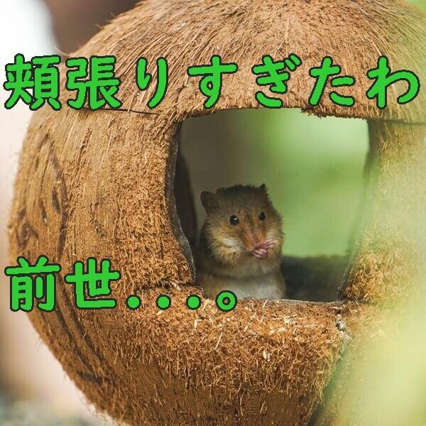 物を溜め込みすぎる人のための片付けサービス トリプルエス 大阪